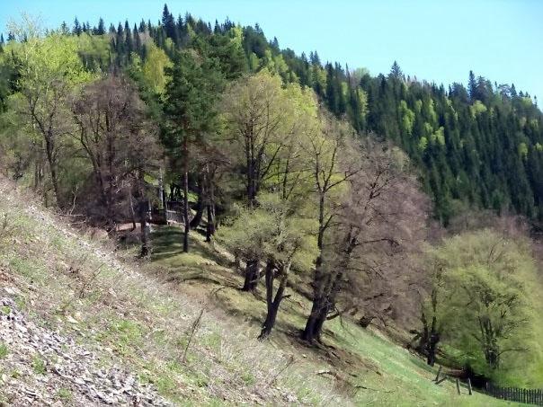 Пейзажи Чусового: Лес на склоне холма (фотография №17)