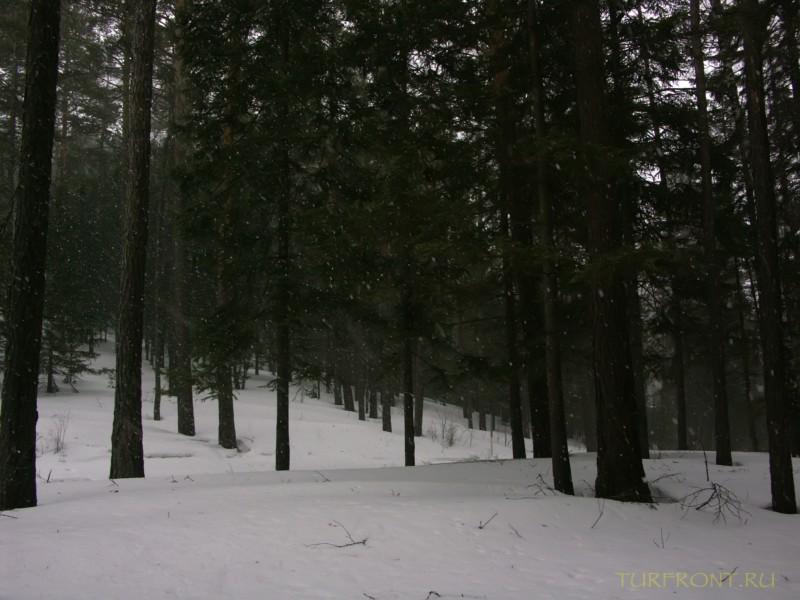 Восемь километров до Столбов: Восемь километров до Столбов (фотография №24)