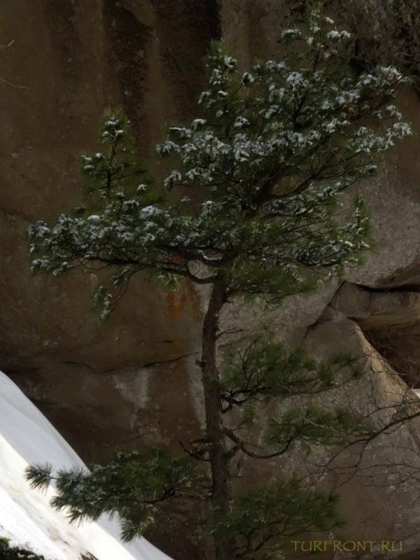 В природном заповеднике Столбы. Красноярск, апрель 2010.: В природном заповеднике Столбы. Красноярск, апрель 2010. (фотография №49)