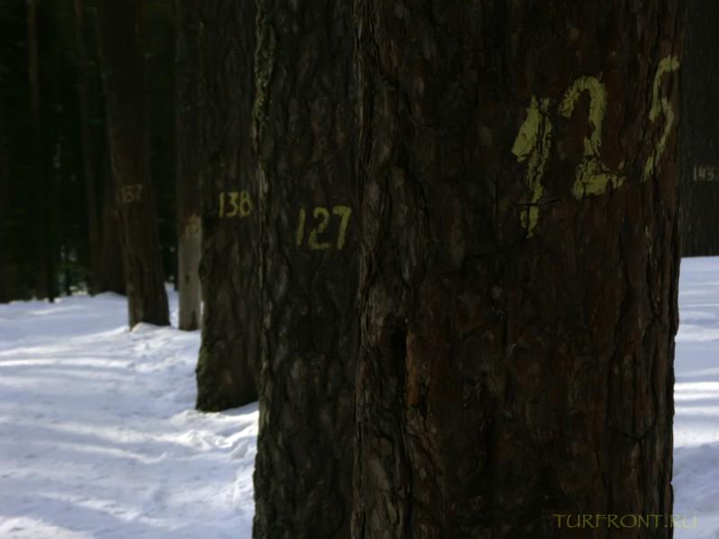 В природном заповеднике Столбы. Красноярск, апрель 2010.: В природном заповеднике Столбы. Красноярск, апрель 2010. (фотография №54)