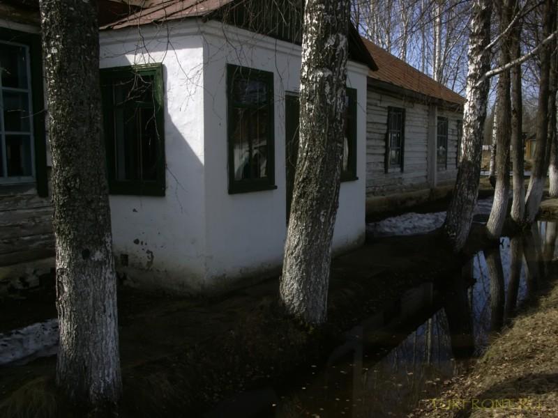 Зона-музей Пермь-36: Березовая аллея на территории зоны. (фотография №28)