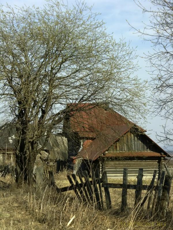 От деревни Кучино вверх до трассы: От деревни Кучино вверх до трассы (фотография №34)
