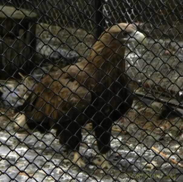 Новосибирский зоопарк: Орел(вроде) за решеткой. (фотография №10)