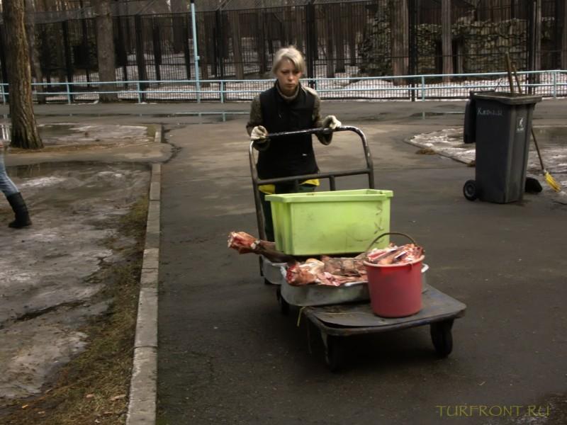 Новосибирский зоопарк: Работница зоопарка, толкающая тележку с мясом. Время обеда у зверей. (фотография №12)
