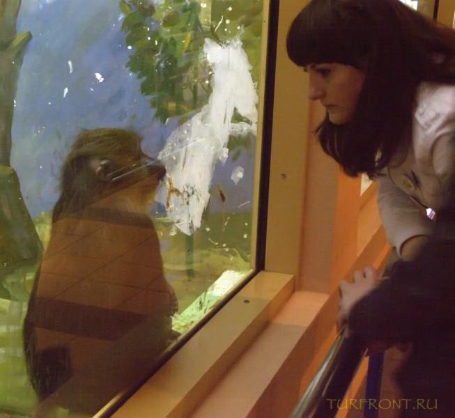 Новосибирский зоопарк: Безмолвный диалог посетителя с макакой в клетке за стеклом. (фотография №21)