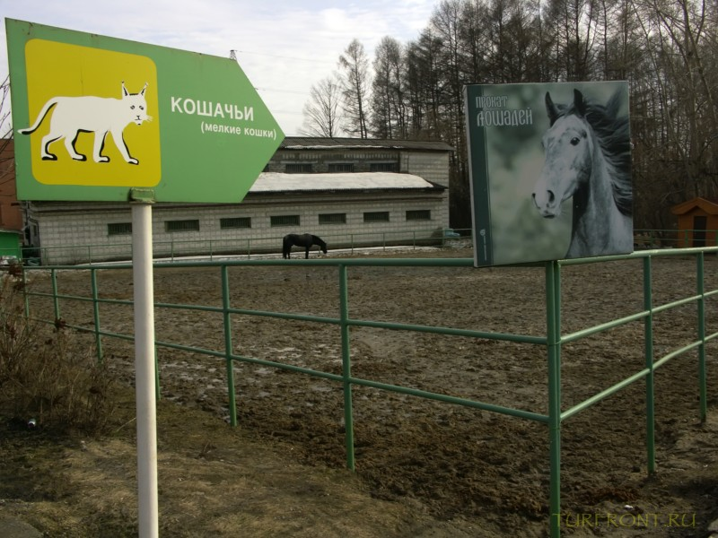 Новосибирский зоопарк: Вольер, где пасется один-единственный конь (может то была кобыла). (фотография №31)
