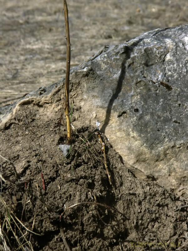 Каменный карьер города Чусовой: Ростки дерева пробиваются сквозь песок. (фотография №11)