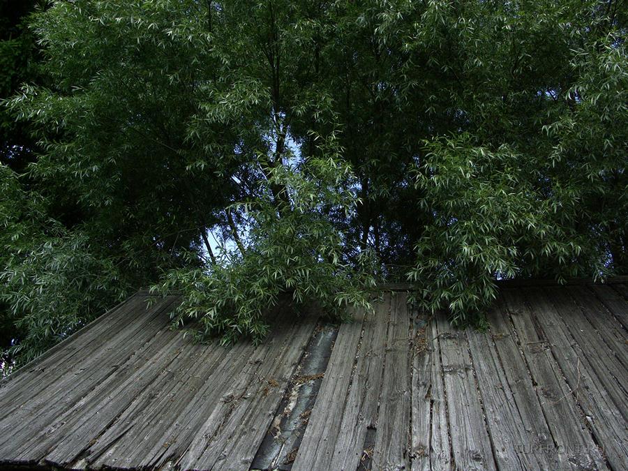 Старая Русса: места Достоевского: Старая Русса; места Достоевского (фотография №13)